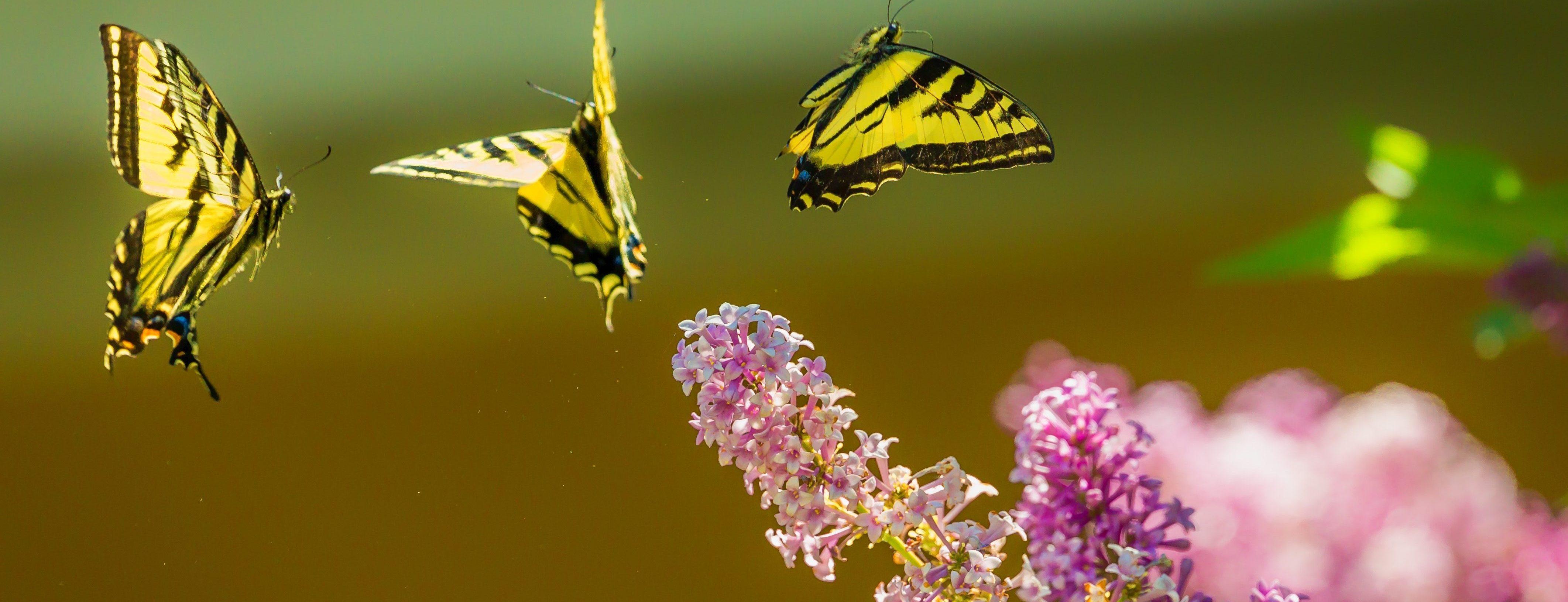 massage ayurvédique abhyanga du corps entier à l'huile détente paix sérénité paris 75014 sophie noiret santé Inde bien-être joie lumière papillon air respiration